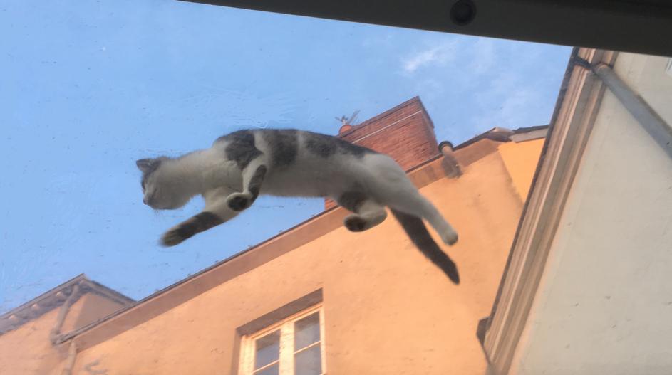 Chat gris, chat bleu